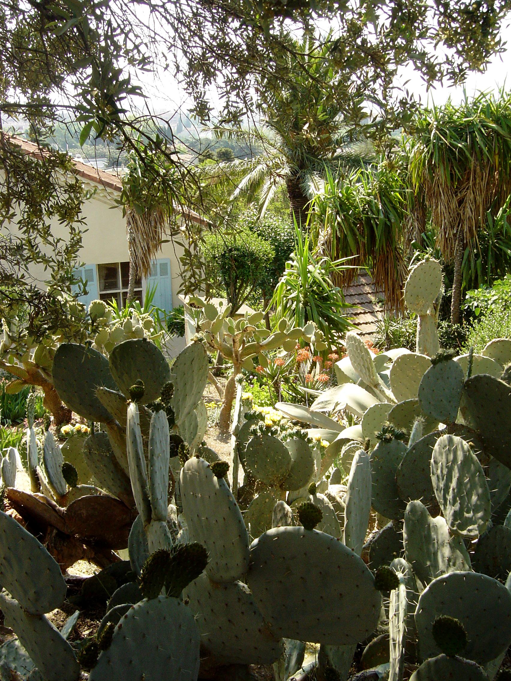 """Huis huren Cote d'Azur """"Le Cactus"""" - Notarishuis met 4 slaapkamers en uitzicht op zee is te huur in Bormes les Mimosas, Zuid-Frankrijk"""